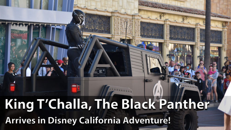 King T'Challa, the Black Panther, Arrives at Disney California Adventure