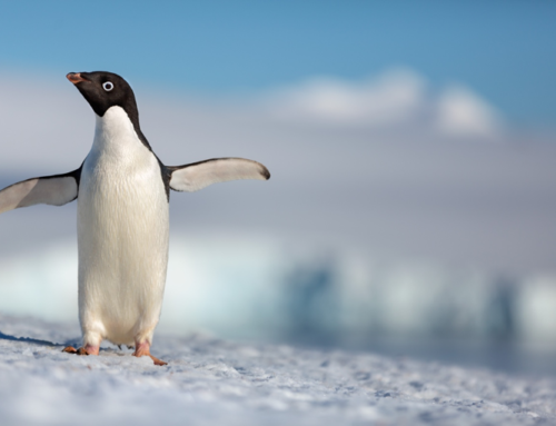 "Disneynature's ""Penguins"" Launches First Trailer to Celebrate Earth Day"