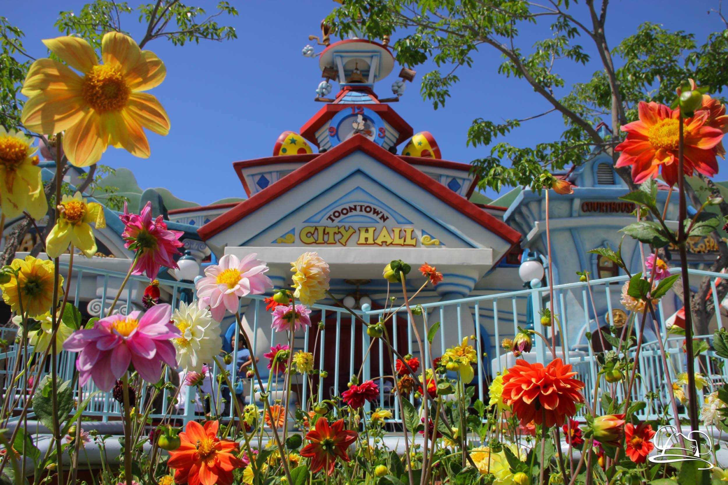 A Busy and Hot Sunday at Disneyland! – Sundays with DAPs Disneyland Photo and Video Update