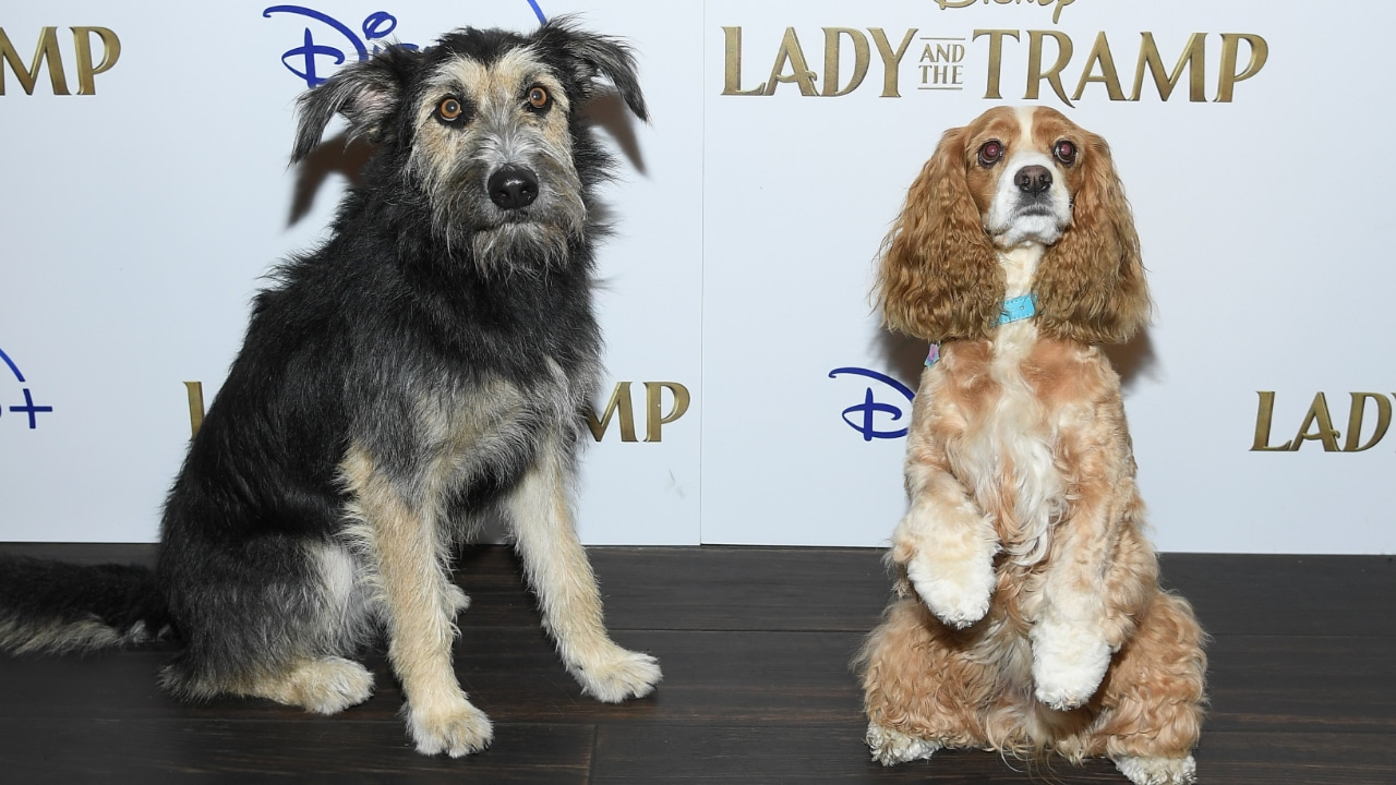 Disney Screens Lady And The Tramp In New York