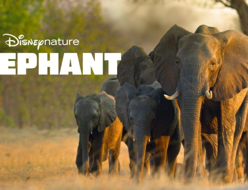 Disneynature's Elephant – A Beautiful Family Trek – Mr. DAPs Review