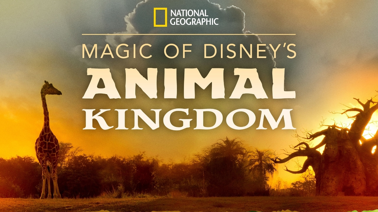Magic of Disney's Animal Kingdom - Featured Image